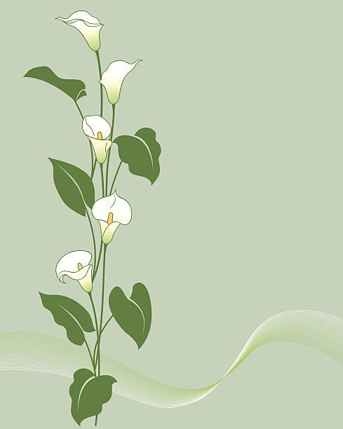 bouquet Calla - Illustration vectorielle