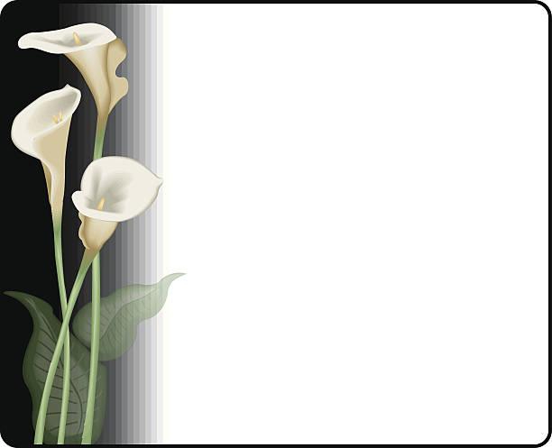 De fleurs de lys (callas) retournées - Illustration vectorielle