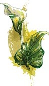 Grunge style calla lilly. - vector illustrations
