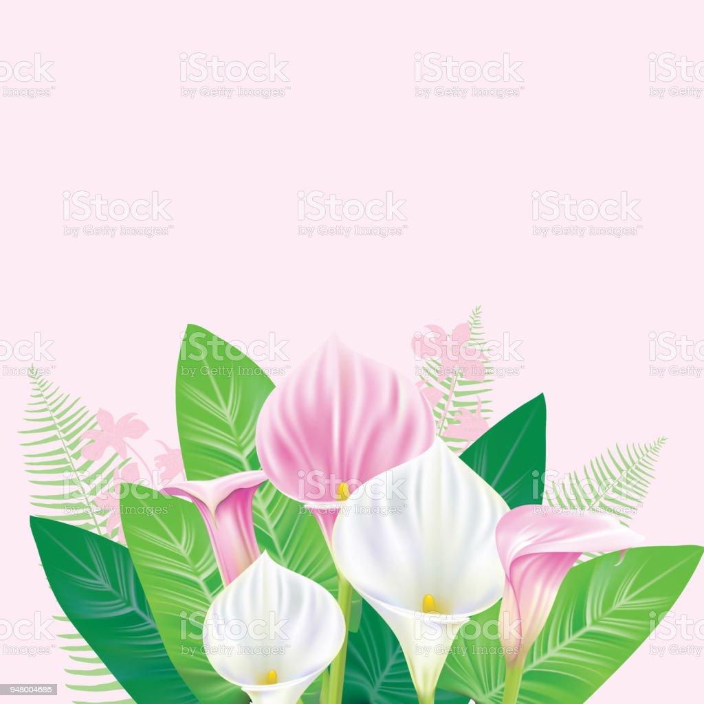 Calla Lily frontière - Illustration vectorielle