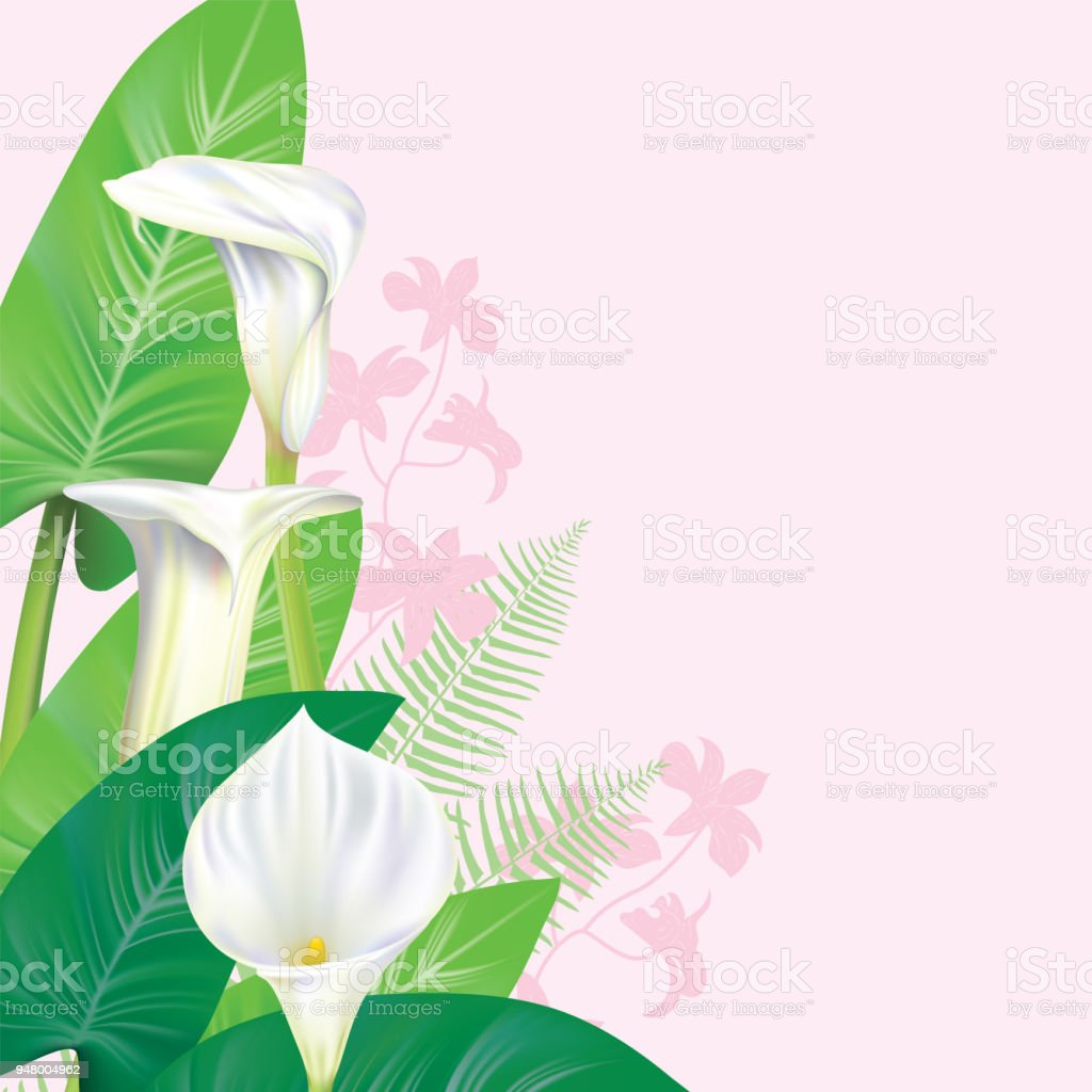 Calla Lily Border Stock Vector Art More Images Of Art Istock