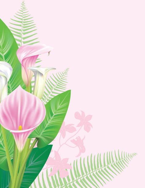 Royalty Free Floral Calla Lily Vertical Frame Background Clip Art ...