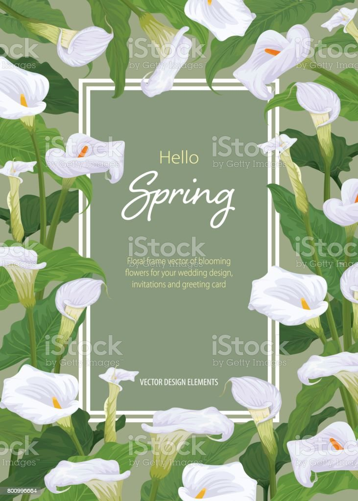 Calla lily cadre de fleurs sur fond vert. - Illustration vectorielle