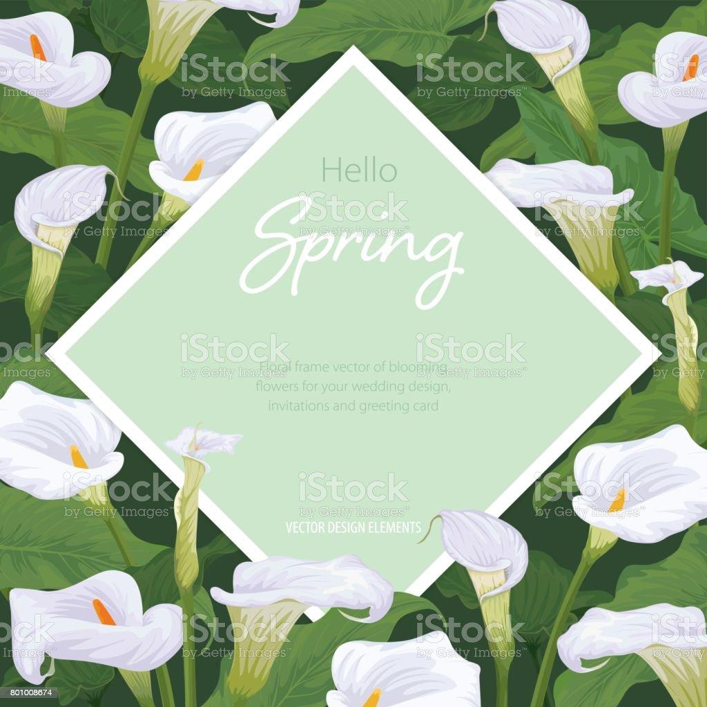 Calla lily cadre de fleurs sur fond vert. Ensemble de vecteur de fleurs pour votre conception. - Illustration vectorielle
