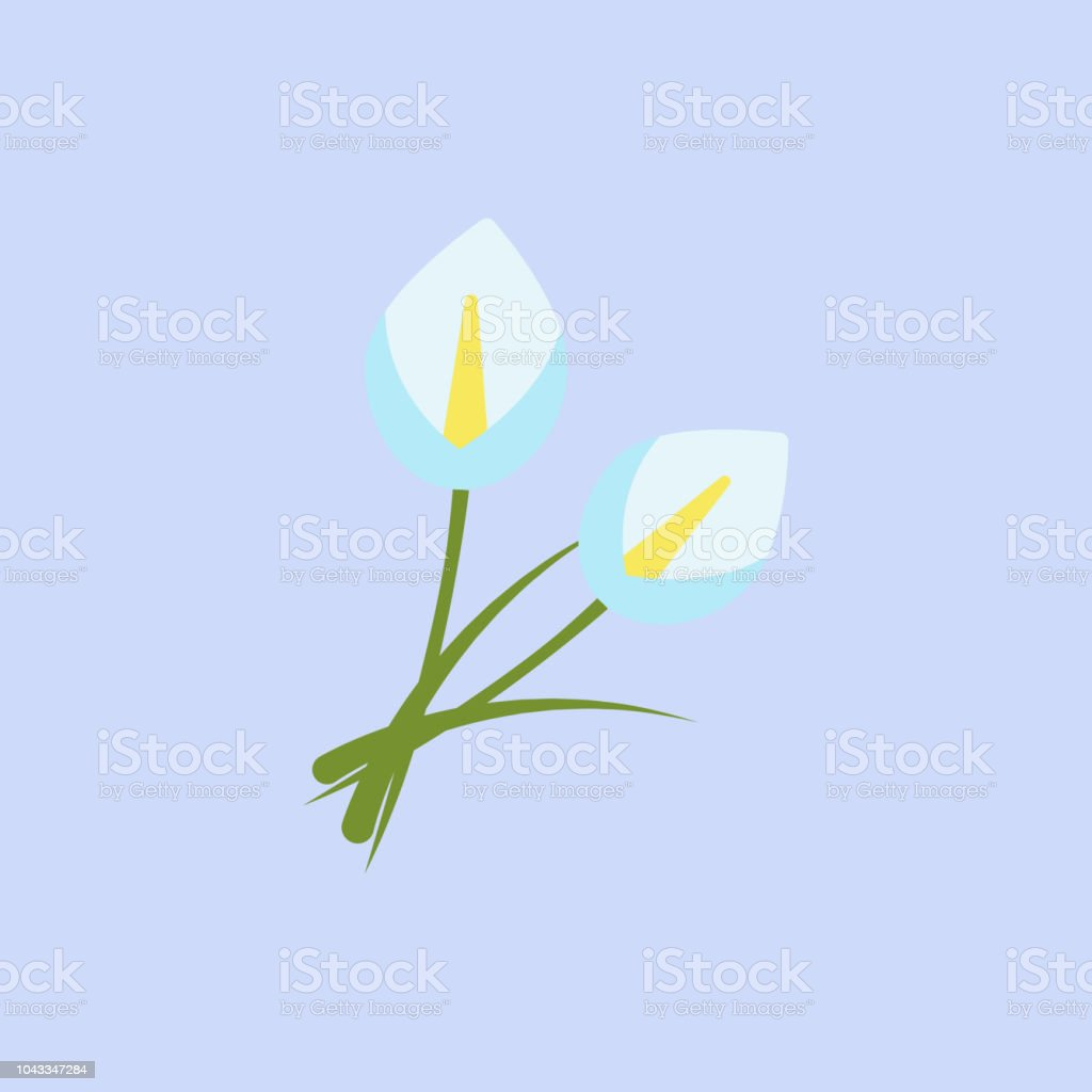 Calla Lily Flowers White Color Icon Element Of Colored Beautiful