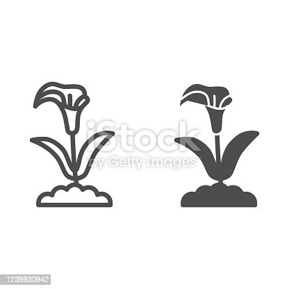 Calla line and solid icon, summer flowers concept, arum lily sign on white background, Calla flower icon in outline style for mobile concept and web design. Vector graphics