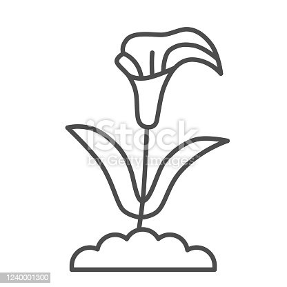 Calla thin line icon, summer flowers concept, arum lily sign on white background, Calla flower icon in outline style for mobile concept and web design. Vector graphics
