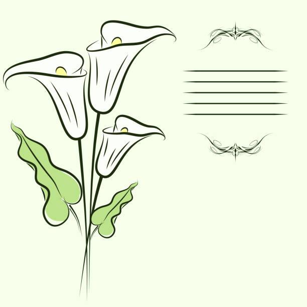 Callas arrière-plan - Illustration vectorielle