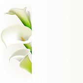 Callas. Flowers. Floral background. White. Bouquet. Border.