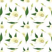 Callas pattern