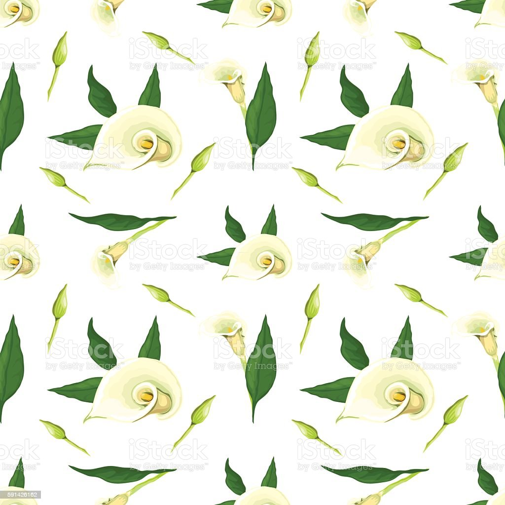 Callas pattern - Illustration vectorielle