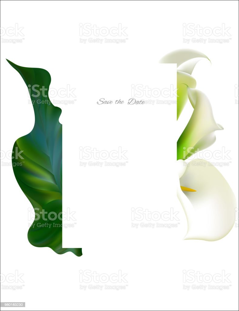 The meaning of colors: callas are not only white