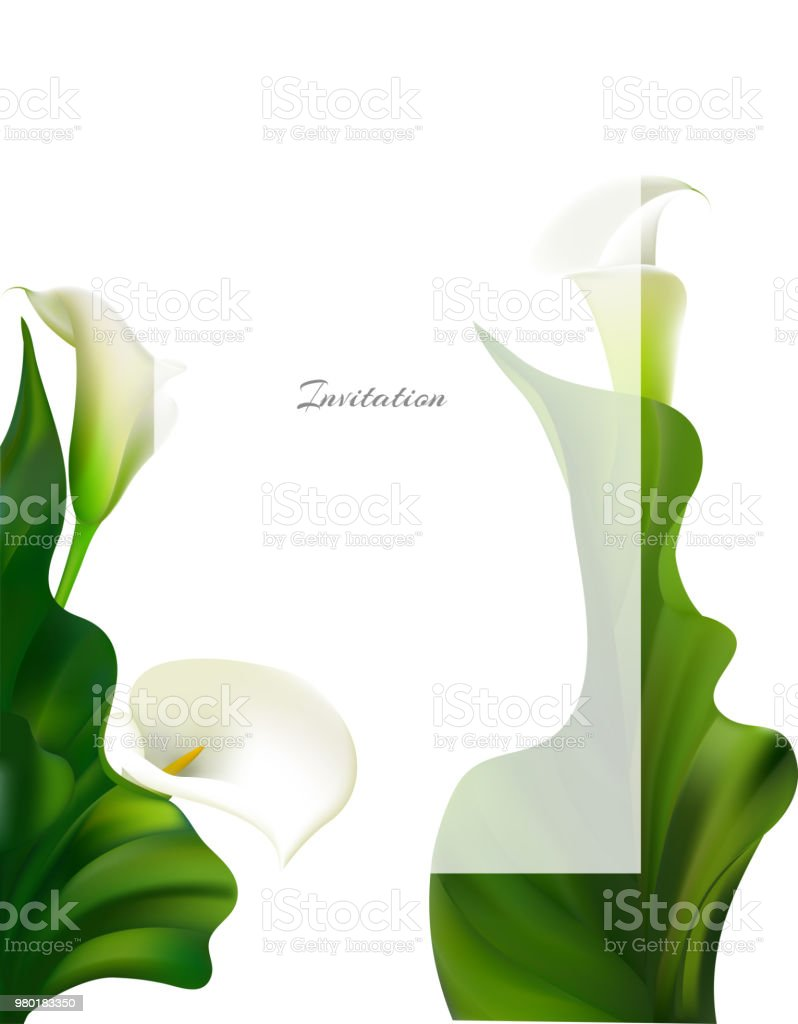 Callas White Flowers Floral Background Buds Vector Illustration