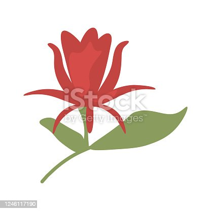Calycanthus red isolated flower element