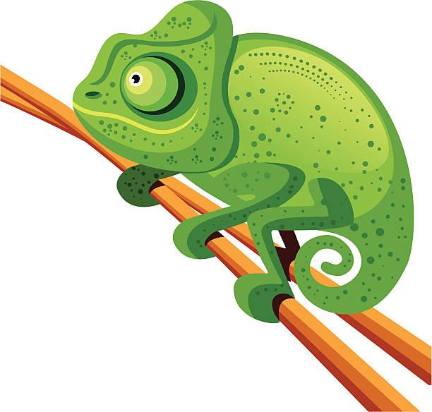 camaleon - chameleon stock illustrations