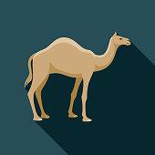 Camel Egypt Icon