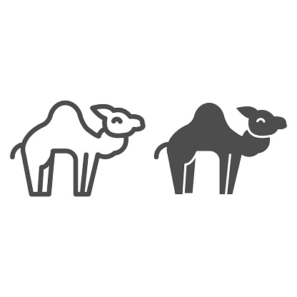 Camel line and solid icon. Desert caravan animal silhouette. Animals vector design concept, outline style pictogram on white background, use for web and app. Eps 10.