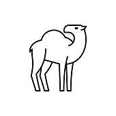 istock Camel line icon 1190415319