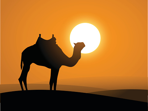 Camel on the desert over the sunset vector