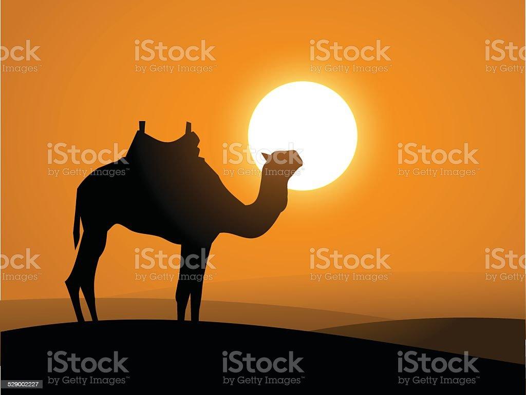 Camel on the desert over the sunset vector vector art illustration