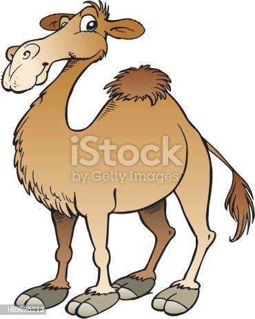 istock Camel 165625213