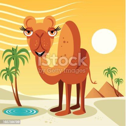 istock Camel 165759739