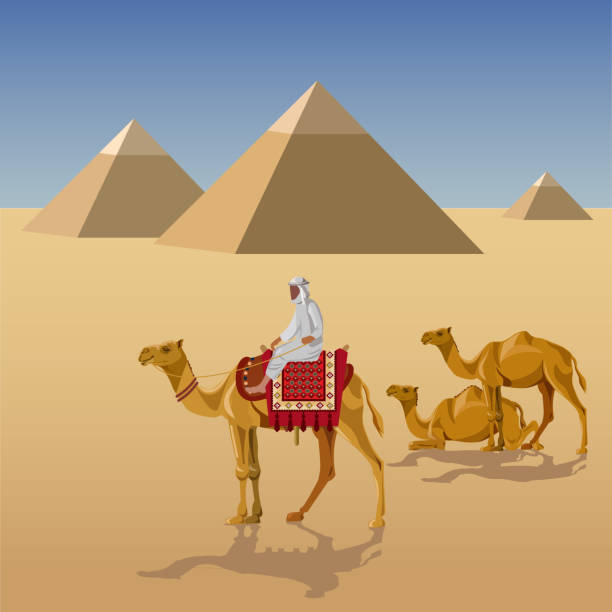 Man Riding A Camel Clip Art At Clker - Camel Riding Vector - Free  Transparent PNG Clipart Images Download