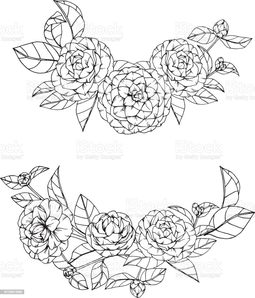 Camellia Flower Line Drawing : 동백 꽃 그리기 고 흰색 배경에 라인 아트와 스케치 일러스트 istock