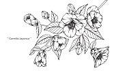 椿スギの花を描きます。