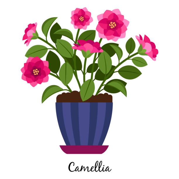 kamelie-pflanze im topf - alpenveilchen stock-grafiken, -clipart, -cartoons und -symbole