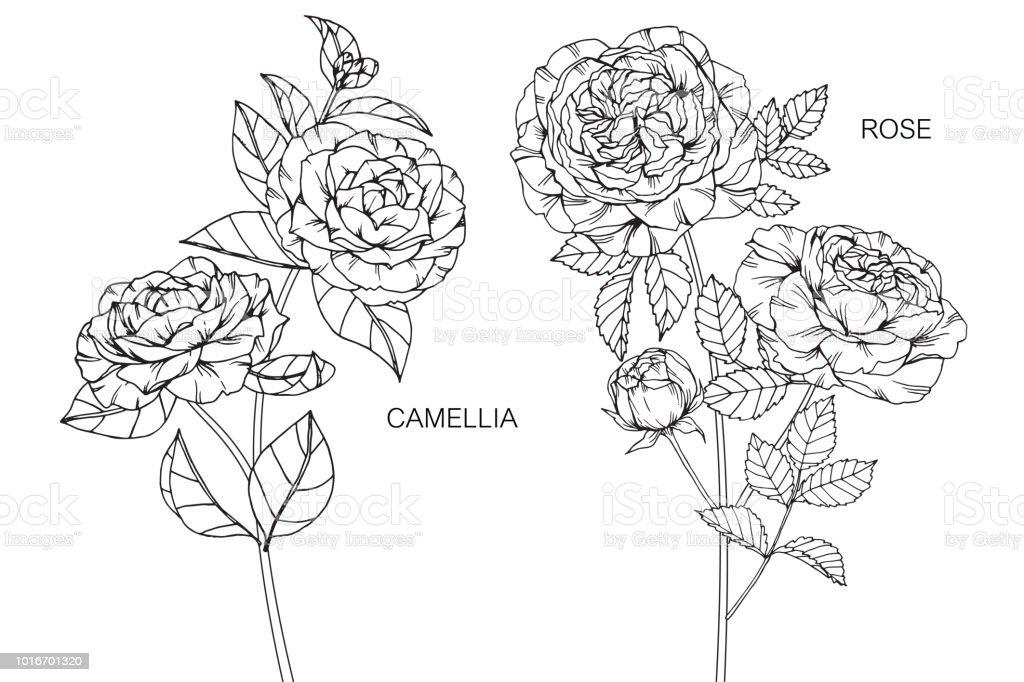 Camelia Fleur Rose Dessin Illustration Noir Et Blanc Avec Dessins Au