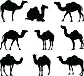 vector file of camels silhouette