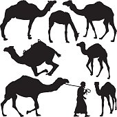 Camel's silhouettes