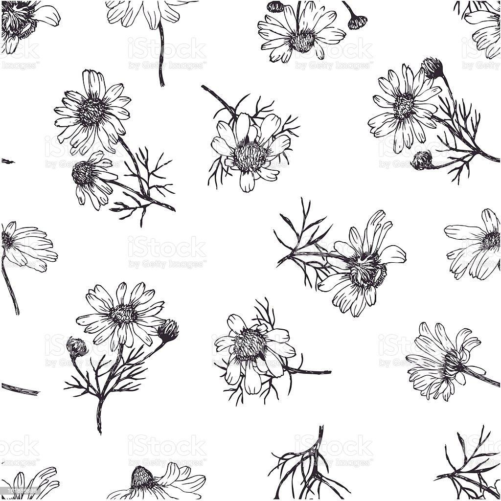 Camomile background vector art illustration