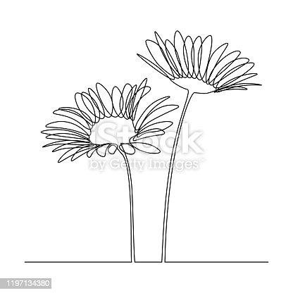 Camomile flowers in continuous line drawing style. Black linear sketch on white background. Vector illustration