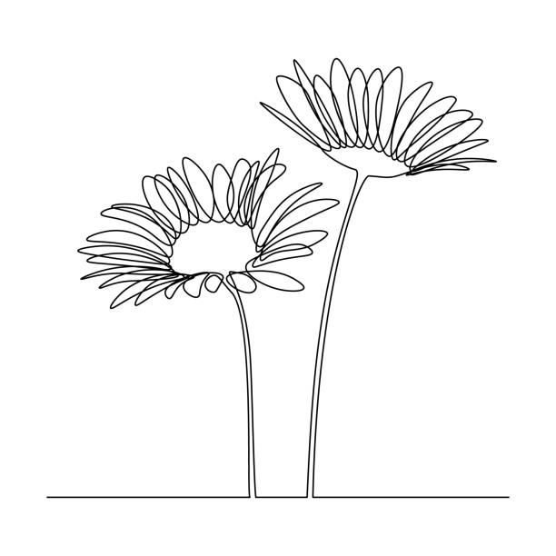 camomile flowers - нивяник stock illustrations