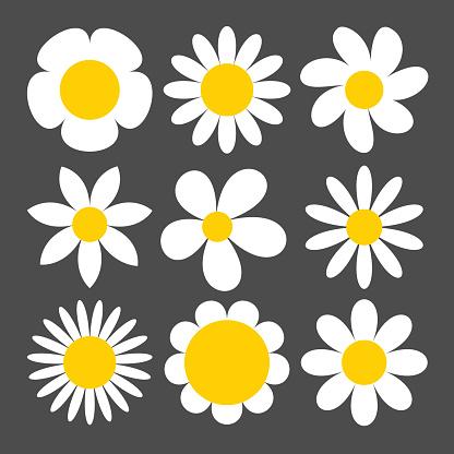 Camomile icon set on grey background.