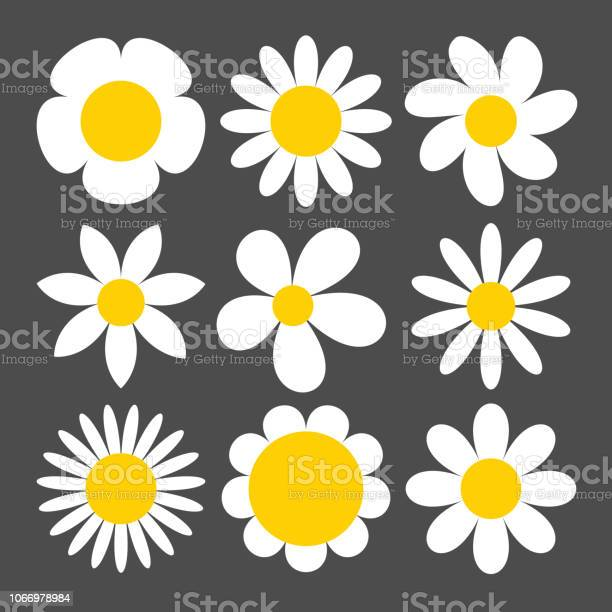 Camomile icon set on grey background vector id1066978984?b=1&k=6&m=1066978984&s=612x612&h=yofzz5ia nt6ak4rofhbzv bvpigpfqo8xge4kfgove=