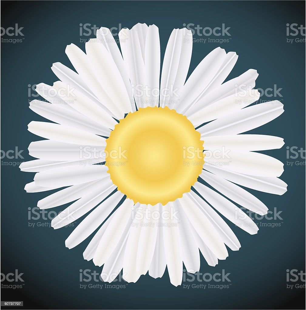 camomile royalty-free stock vector art