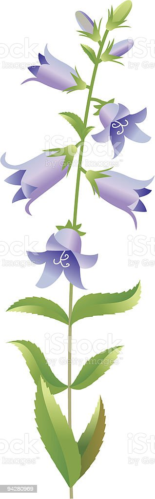 Campanula royalty-free campanula stock vector art & more images of bluebell
