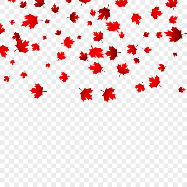 canada day maple leaves background. falling red leaves for canada day 1st july - canada day stock illustrations