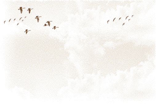 Canada Geese Flying and Cloudscape