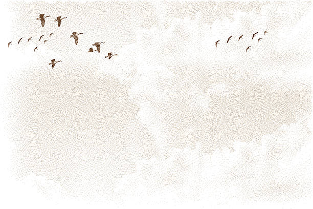 Canada Geese Flying and Cloudscape Etching illustration of flying geese and cloudscape. Lots of great texture. Makes an excellent background. Birds and clouds on separate layers for easy editing. canada goose stock illustrations