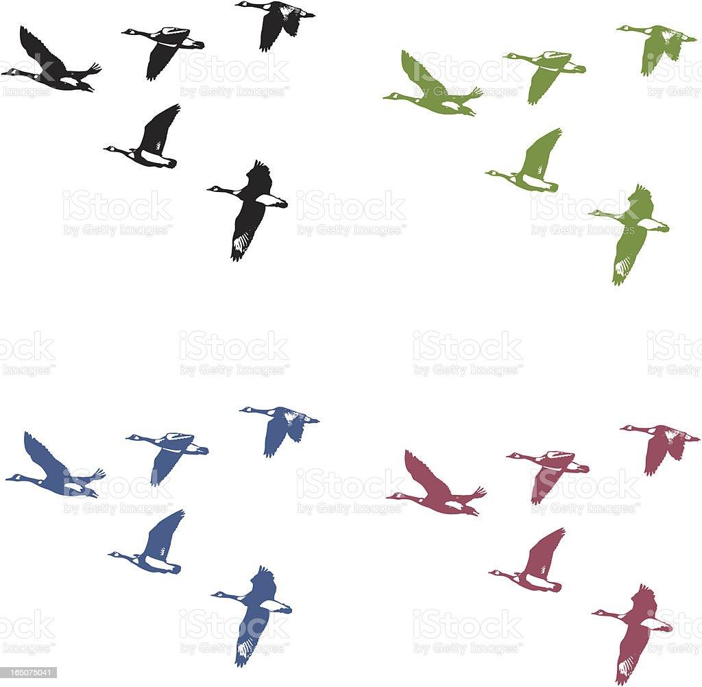 Bernaches du Canada en vol - Illustration vectorielle