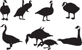 Silhouette illustration of Flock of Canada Geese flying in formation