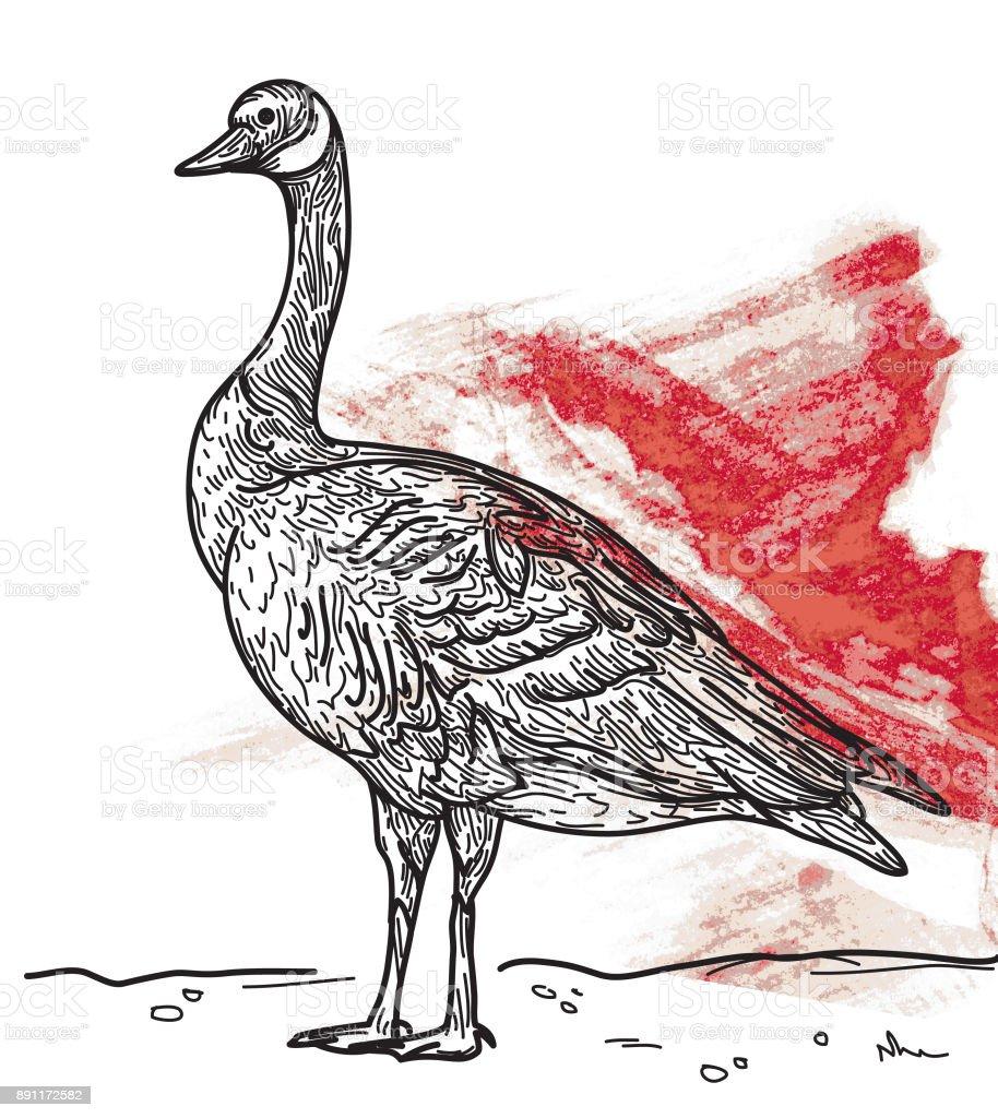 Bernache du Canada  - Illustration vectorielle