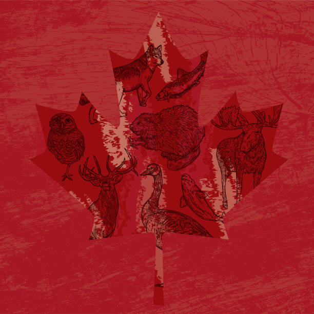 Canadian Animals in a Maple Leaf vector art illustration