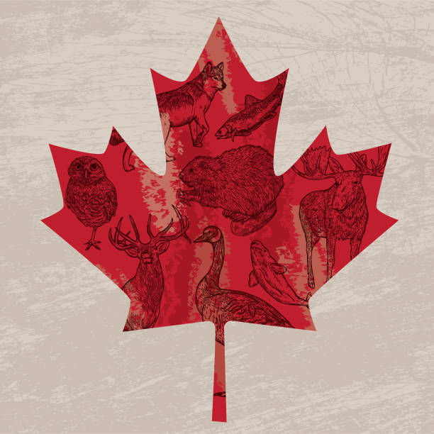 canadian animals in a maple leaf - canada day stock illustrations