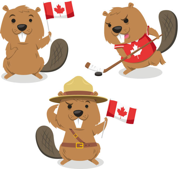Canadian Beaver holding flag jockey boy scout always ready Canadian Beaver holding Canada flag, beaver playing ice jockey, boy scout beaver always ready. Vector illustration cartoon. stuffed stock illustrations