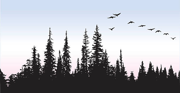 Canadian Geese Glying Above The Trees A vector silhouette illustration of a flock of geese flying over a pine forest. goose bird stock illustrations